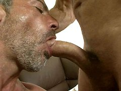 Hairy older gay blowing a muscle hard cock